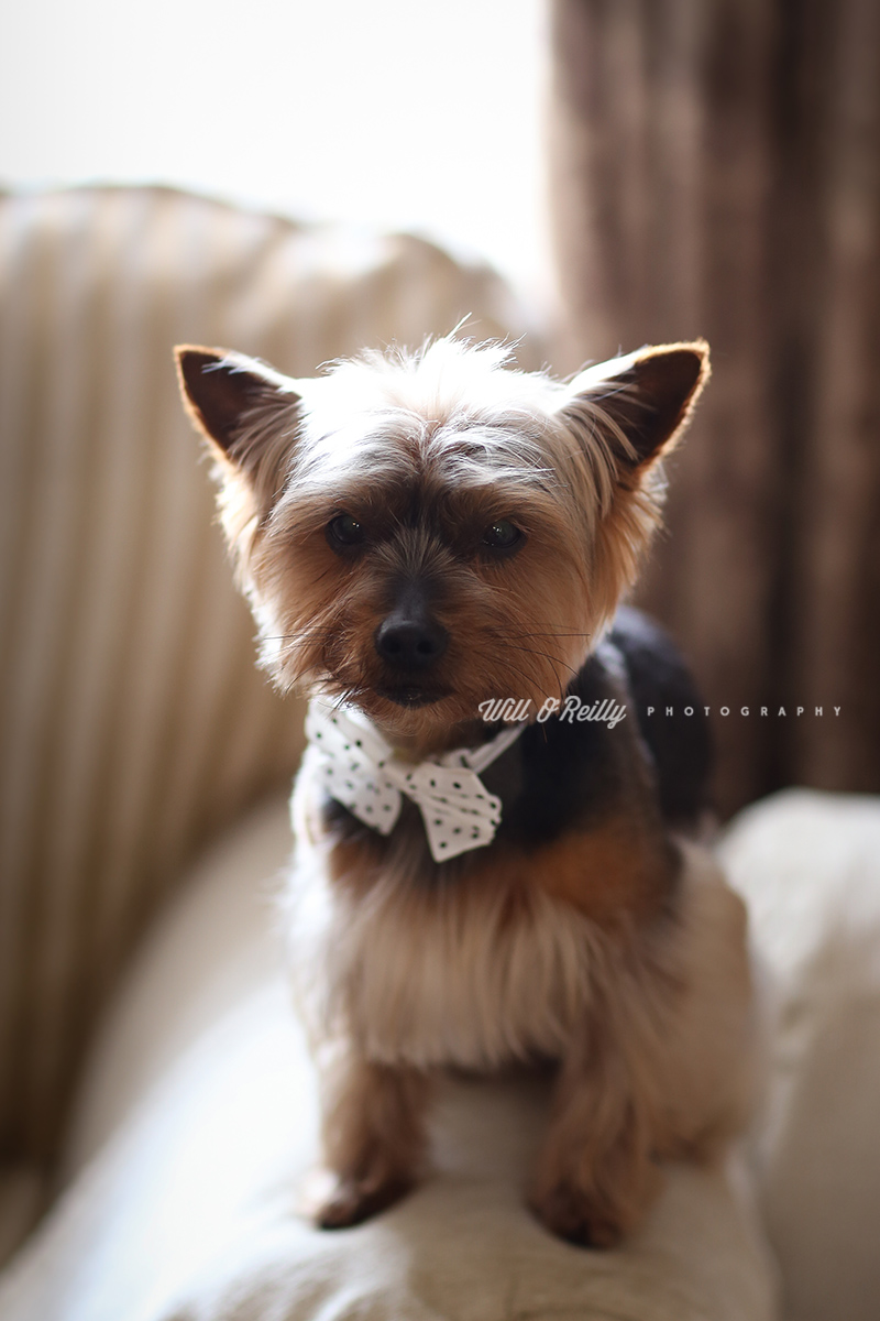 Wedding Dog